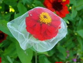 Gift Zinnia with seed saving bag